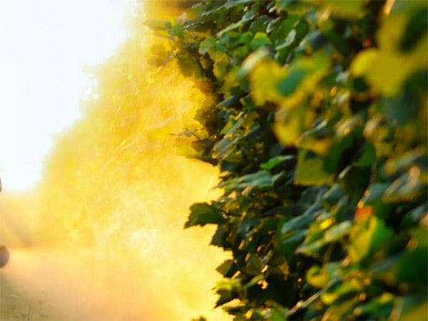 diserbi-fitosanitari-reggio-emilia