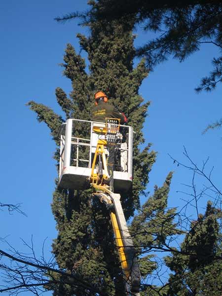 potatura-alberi-alto-fusto-sassuolo-reggio-emilia