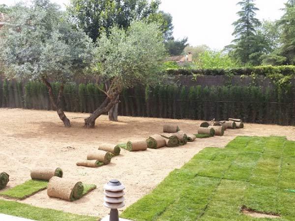 Prato pronto vignola reggio emilia posa tappeto erboso a for Prato pronto