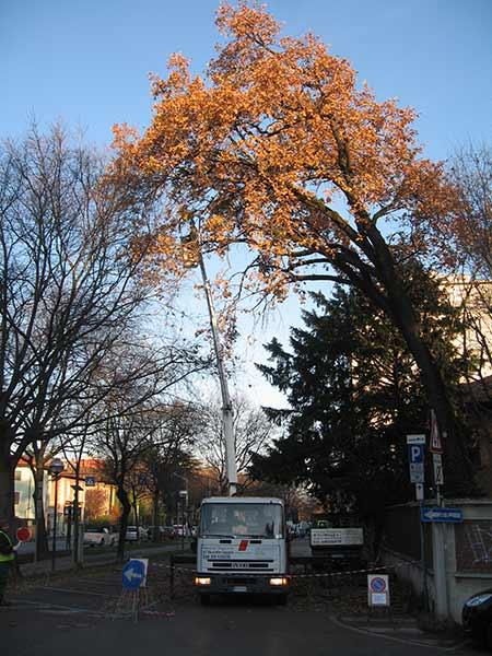 preventivo-potatura-alberi-alto-fusto-sassuolo
