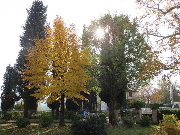 taglio-alberi-condominio-reggio-emilia